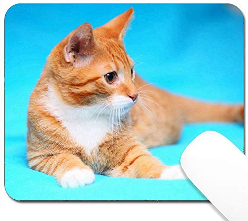 MSD Mouse Pad with Design - Non-Slip Gaming Mouse Pad - Animals at Home Red Cute Little Baby cat pet Kitten Laying on Bed Turquoise Blanket -