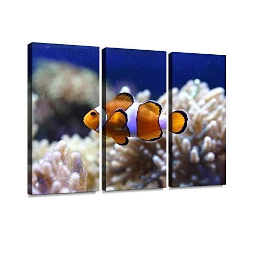 - A Single Clown Fish in Front of Anemones Print On Canvas Wall Artwork Modern Photography Home Decor Unique Pattern Stretched and Framed 3 Piece