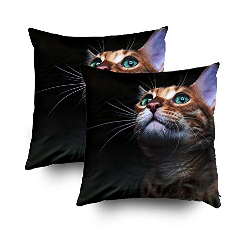 Asdecmoly Summer Decorative Pillowcase Pack of 2 Beautiful Bengalensis Cat IFS Isolated A Cover for Kids Throw Cushion Square 18X18 Inchs Home Sofa Bed Travel Gift