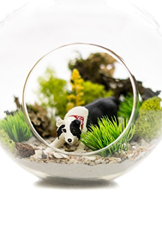 Nautical Crush Trading Border Collie Lovers Terrarium Design Kit | Dog Breed Series | Complete DIY Gift Set | Glass Globe w/Stem (Border Collie)