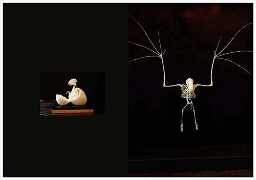 Cabinets de curiosit s la passion de la collection les beaux livres - Cabinet de curiosite contemporain ...