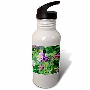 3dRose Danita Delimont - Flowers - Columbine Flowers, Usa - Flip Straw 21oz Water Bottle (wb_277984_2)
