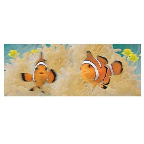 - 1 X Animated Clown Fish Bookmark - Ruler By Emotion Gallery