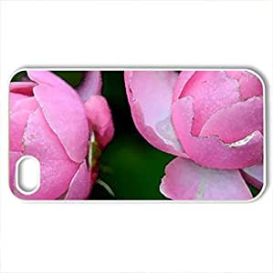 2 Beautiful Pink Roses to brighten people's daCase For Iphone 5C Cover (Flowers Series, Watercolor style, White)