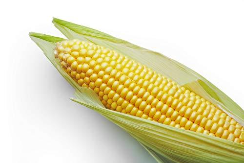 early corn - 5