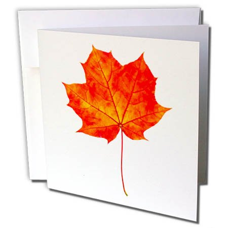 3drose Alexis Design Floral Red Maple Leaf Transparent Background 1 Greeting Card With Envelope Gc 264133 5 Buy Online In Bulgaria 3drose Products In Bulgaria See Prices Reviews And Free Delivery Over 120 Lv Desertcart
