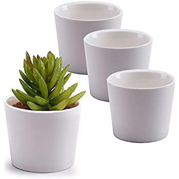 Amazon T4u 225ice Cream Serial Modern Sucuulent Cactus Plant