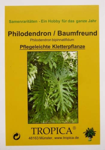 Philodendron//Baumfreund - 10 Samen Philodendron bipinnatifidum TROPICA