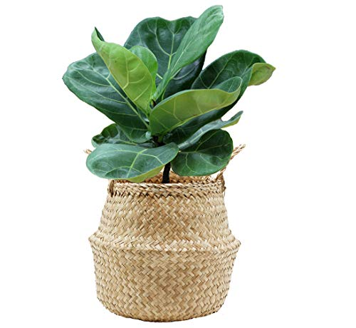 VNCraft Foldable Seagrass Belly Basket with Handles for Storage, Nursery Laundry Tote Beach Bag Plant Pots Cover Indoor Decorative