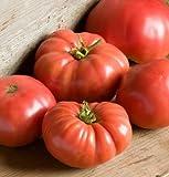 german giant tomato seeds - 25 Fresh Seeds - German Giant Tomato