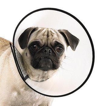 Top Performance Plastic Elizabethan Pet Collar, X-Small, 8-Inch