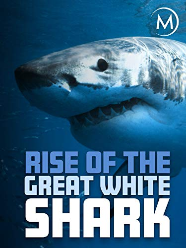Rise of the Great White Shark