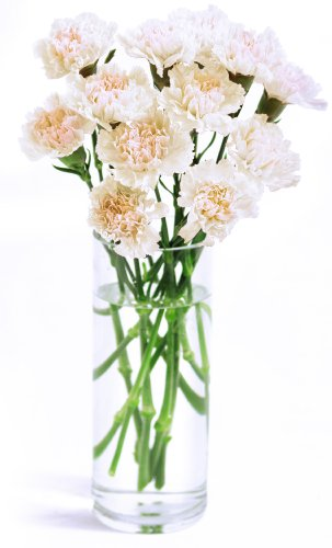 Amazon.com : White Carnation Bouquet (12 Stems) - With Vase ... on flower bouquet, flower stand, flower pot, flower window, flower crystal, flower punch set, flower dinnerware set, flower coloring pages, flower painting, flower trash can, flower tissue box cover, flower decor, flower basket, flower decoration, flower arrangements, flower sign, flower container, flower gift, flower plant, flower store,
