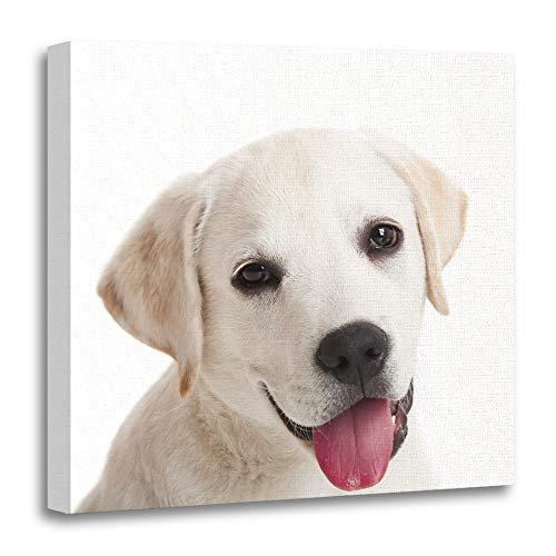 vas Print Artwork Decorative Print Beautiful Portrait of Labrador Retriever Puppy Tongue Out White Wooden Frame 20x20 inches Wall Art for Home Decor ()