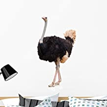 Wallmonkeys Portrait Ostrich Wall Decal by Peel and Stick Graphic (36 in H x 35 in W) WM118726