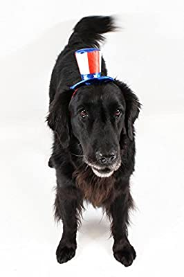 Uncle Sam 4th of July Hat for Large Dogs Headband by Midlee