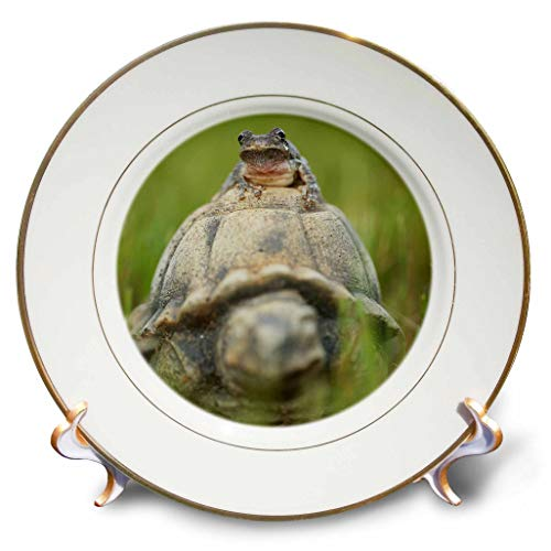 (3dRose Stamp City - Amphibian - A Macro Photograph of a Copes Gray Tree Frog on a Turtle Garden Statue - 8 inch Porcelain Plate (cp_315552_1))
