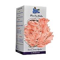 Culture de Champignons | Kit Pleurotes Étoilés | Pleurotes Roses | FABRIQUE EN FRANCE | Blue Farmers | Cadeau Idéal pour Noël