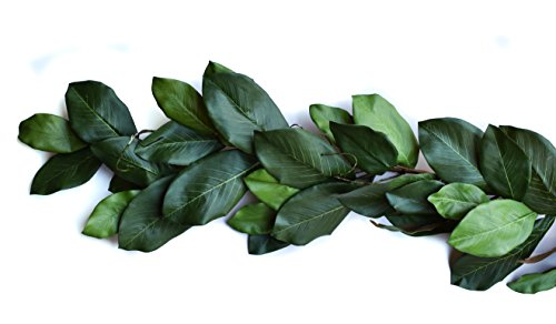 Mills Floral Magnolia Garland - Mountain 6', Green