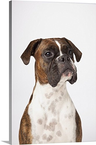 LJM Photo Premium Thick-Wrap Canvas Wall Art Print entitled Portrait Of Boxer Dog On White Background 16