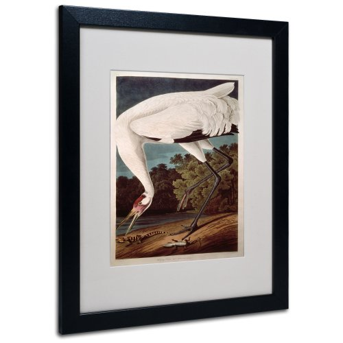 Whooping Crane Matted Artwork by John James Audubon with Black Frame, 16 by ()