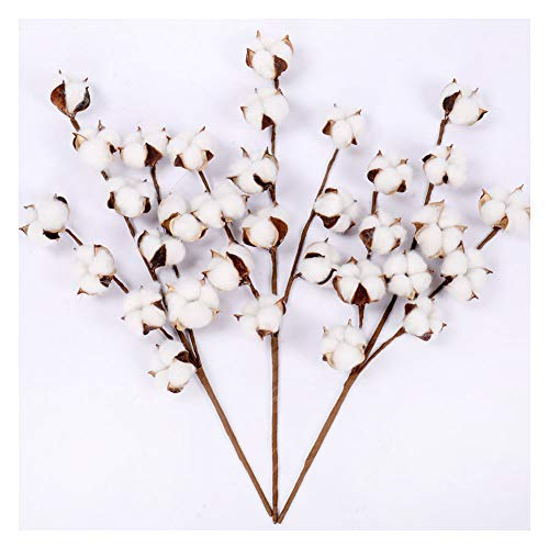 (Darget Cotton Stems - 20 Inch Tall (3 Stems/Pack) Made from Real Natural White Cotton Flowers Bolls Farmhouse Style Rustic Floral for Home Decor Wedding)