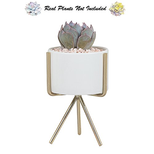 "Succulent Planter Stand with Plant Pot, 5"" H Modern Minimalist Indoor White Ceramic Flower Pot with Triangle Metal Holder for Succulents Mini Cactus Air Plants Herb Fern Bonsai by Ebristar - Small"