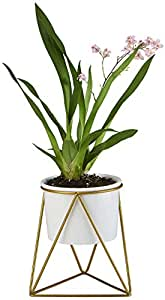 Planter Pot Indoor, Flowerplus 4.33 Inch White Ceramic Medium Succulent Cactus Flower Plant Round Bowl with Iron Rack Holder and Plants Sign for Indoors Outdoor Home Garden Kitchen Decor (Golden)