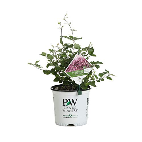 Amazon Com Amazon Plants Store Patio Lawn Garden