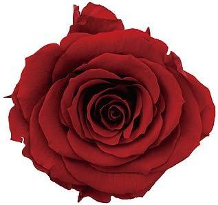 Smart Garden Solar Red Rose 2 Pack