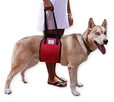 Dog Lift Support Harness with handle for canine aid - Lifting Older K9 pets. Injuries, Arthritis or Weak hind rear legs & Joints. Medium, Large, Nylon breed Assist Sling for mobility & Rehabilitation