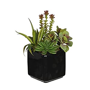 House of Silk Flowers Artificial Succulent Garden (B) in Black Cube Vase 4