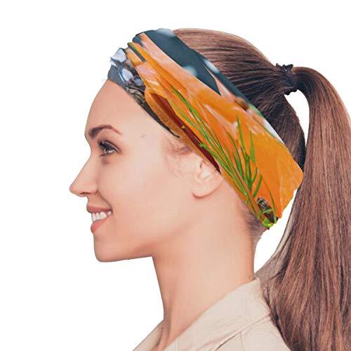 (Fresh and Juicy Salmon Elastic Headbands Head Wrap Shawl Sports Sweatband Face Mask Magic Scarf Hair Accessories Bands Ties for Women Girls Running Fitness Yoga)