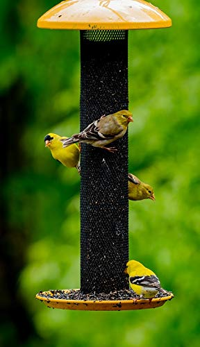 Home Comforts Peel-n-Stick Poster of Feed Yellow Finches Birds Feeder Migrating Wild Vivid Imagery Poster 24 x 16 Adhesive Sticker Poster Print