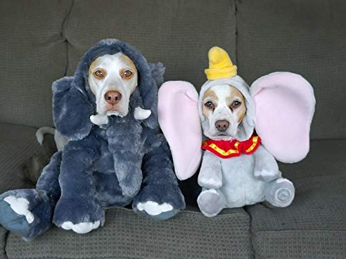 17 Dog Costumes for
