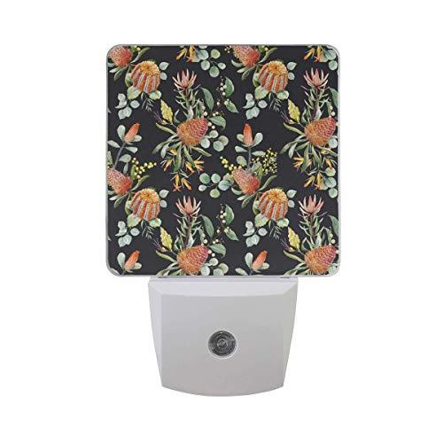 Banksia Flower - 2 Pack 0.5W Plug-in LED Night Light Lamp with Dusk to Dawn Sensor,Kids, Adult, Bedroom, Hallway, Bathroom, Kitchen, Stairways, Corridor, or Any Dark Room - Banksia Flower Black