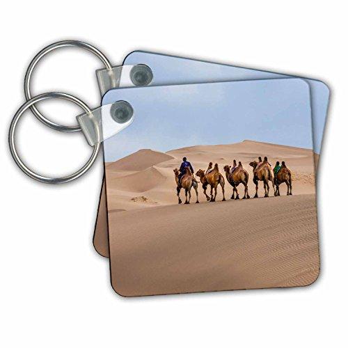 Gobi Desert Camel - 8