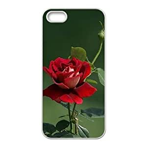 LIULAOSHI Beautiful Rose Flower Phone Case for iphone5s White [Pattern-5] by Maris's Diary
