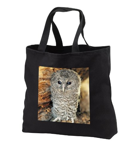 - Kike Calvo Animals - Tawny Owl, Strix aluco One month young owl Aragon Spain - Tote Bags - Black Tote Bag JUMBO 20w x 15h x 5d (tb_9903_3)