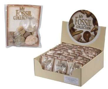 Fossil Collection w. Magnifier GiftLocal