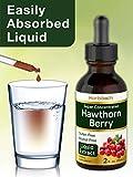 Horbaach Hawthorn Extract | 2 oz | Alcohol Free