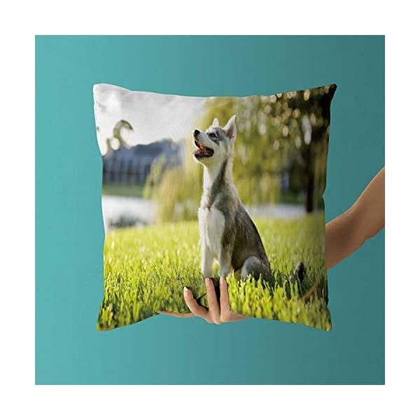 "Nine City Alaskan Klee Kai Puppy Sitting on Grass Looking up,Pillow Case Sofa Bed Throw Cushion Cover Decoration 32"" X 32"" 3"