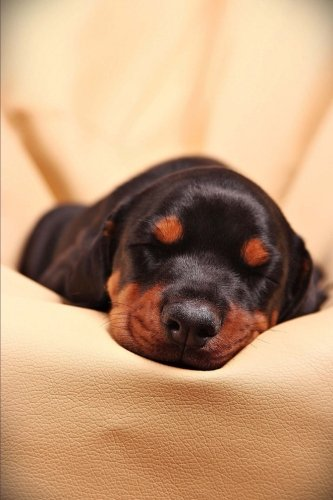 Sweet Snoozing Little Doberman Puppy Dog Pet Journal