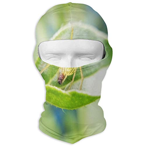 Balaclava Green Spider On The Leaf Full Face Masks UV Protection Ski Hat Headwear Motorcycle Neck Warmer Hood for Cycling Snowboard Women Men Youth