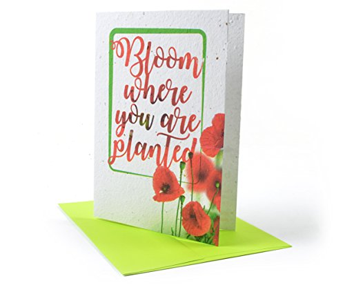 (Everyday Occasion Greeting Cards (Bloom Where You Are Planted))