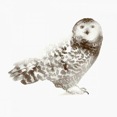 Owl by Edward Selkirk 11