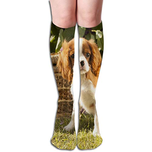 Cavalier King Charles Cotton Stockings - Socks Cute Pet Cavalier King Charles Spaniel Fabulous Womens Stocking Holiday Sock Clearance for Girls