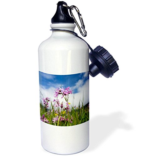 3dRose Danita Delimont - Flowers - Ragged Robin Wildflowers. Island Vagar, Faroe Islands, Denmark - 21 oz Sports Water Bottle (wb_277340_1)