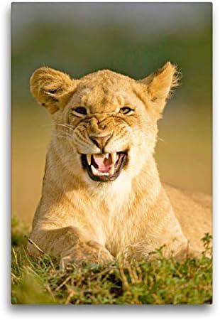 CALVENDO Lienzo Premium de 50 cm x 75 cm de Alto, ¿Malo Humor? Cuadro de Pared con diseño de león enfadado, Imagen prefabricada en auténtica Reserva de Mara, Kenia, África Animales