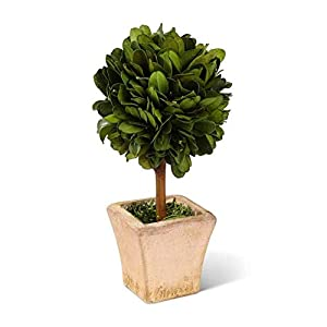 KK 6 Inch Preserved Boxwood Mini Topiary in Pot 93